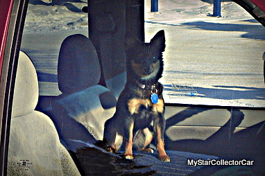 dog-dsc02488