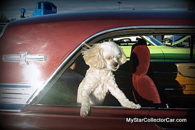 dogs-imgp2410