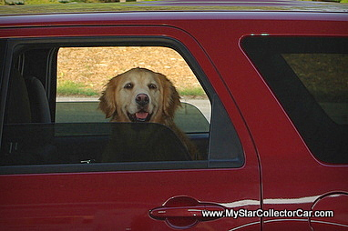 dogs-imgp3343