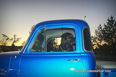 dogs-imgp5862