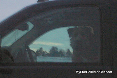 dog-dsc02395