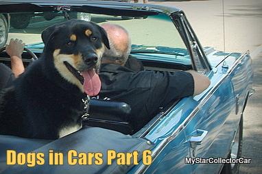 dog-imgp2972-001