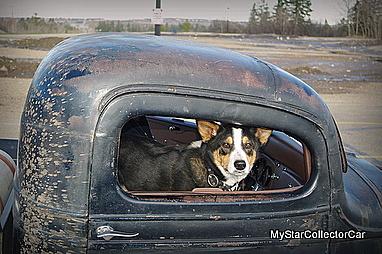 dog-imgp6864