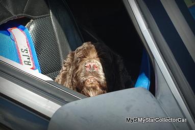 dog-imgp7186